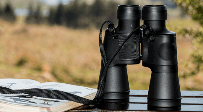 Steiner nighthunter und zeiss victory ht im test faszinationjagd