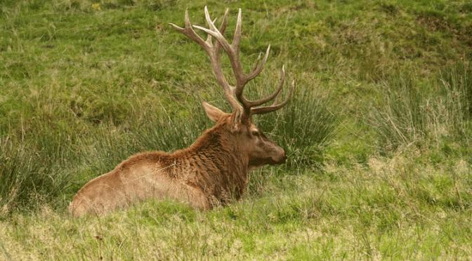 Unterschiede zwischen jungen und alten Hirschen