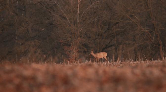 Spring Trailer – Flo Maack