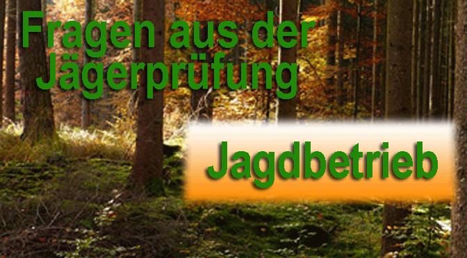 """Jagdprüfung """"Jagdbetrieb, Führen von Jagdhunden – Teil II"""" – Testen Sie Ihr Wissen!"""