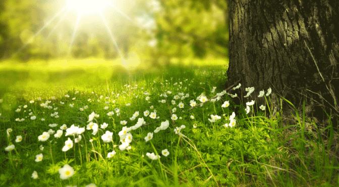 Anlage und Pflege von Wildwiesen