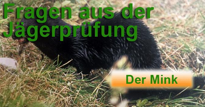 """Jagdprüfung """"Mink"""" – Testen Sie Ihr Wissen!"""