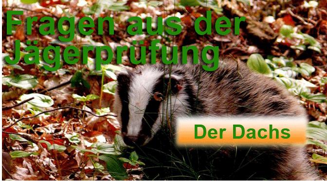 """Jagdprüfung """"Dachs"""" – Testen Sie Ihr Wissen!"""
