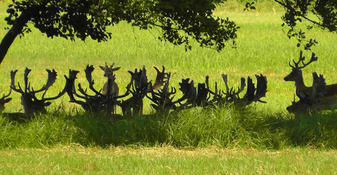 Wildbestandsschätzung, bewährte Methoden für die Jagdpraxis