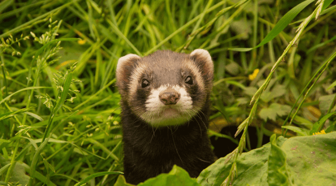 Iltis – Vor und Nach der Jägerprüfung