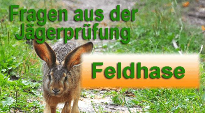 """Jagdprüfung """"Feldhase"""" – Testen Sie Ihr Wissen!"""